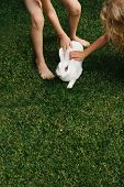 Children Petting A White Furry Bunny Rabbit On A Green Lawn. poster