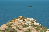 Seascape With Rocky Cliffs. Soaring Bird Over Sky. Peaked Rocks And Cliffs On The Seashore. poster