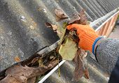 Roofer Hand Cleaning Rain Gutter From Leaves In Autumn. Roof Gutter Cleaning From Fallen Leaves. Hou poster