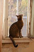 Pretty Gray Kitty On The Windowsill. Cat Portrait poster