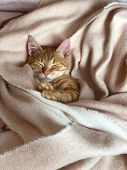 A Little Ginger Kitty Sleeping In A Cozy Place poster