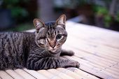 Blind Cat Or Injured Cat Looking With Only One Eye And Lying On The Table, Poor Stray Cat. Cat With  poster