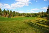 Golf Courses In The Pine Forest, Green Manicured Lawns, Easy Bend Of The Terrain, Nature Of Scandina poster