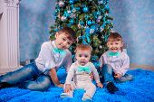 Three Brothers With A Christmas Tree. Family Celebration. Smart Family Next To The Christmas Tree. N poster