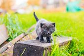 A Scared Kitten Stands On A Log. Little Kitten On The Street. Fluffy Kitten. . Pets poster