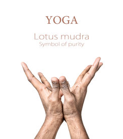 stock photo of samadhi  - Hands in lotus mudra by Indian man isolated at white background - JPG