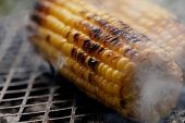picture of corn cob close-up  - roasted sweet corns on the bbq grill - JPG