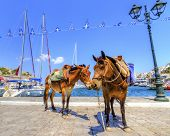 stock photo of loading dock  - Two donkeys at the Greek island - JPG