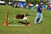 Canine Agility Trials