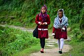 School girls going in the school in the Himalayas