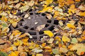 Round Sewer Manhole With Autumnal Leaves In The Park