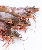 picture of tiger prawn  - big fresh tiger prawns - JPG