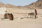 pic of burka  - Traditional egyptian bedouin girl with donkey working a village water wheel in eastern desert - JPG
