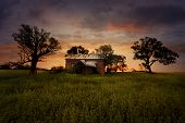 picture of farm-house  - Old abandoned rural farm house lies in ruins in a field with overgrown weeds at sunset - JPG