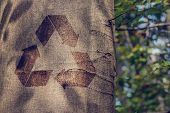 image of reprocess  - Recycling symbol on the trunk of a tree outdoors in woodland in a conceptual image of re - JPG