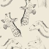 foto of lamas  - sketch of  camel - JPG