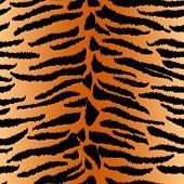 stock photo of furry animal  - Animal print - JPG