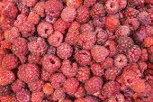 picture of hacienda  - Juicy red ripe raspberry closeup as background - JPG
