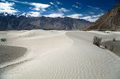 pic of jammu kashmir  - Dunes in Nubra Valley  - JPG