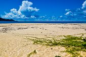 picture of creeper  - Sand with creeper on the seashore - JPG