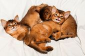 image of ruddy-faced  - Three cute kittens lying on white bed and looking at camera - JPG