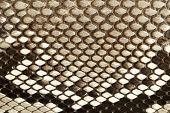 image of jungle snake  - Snake skin texture close up as background - JPG