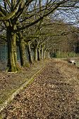 pic of row trees  - A row of trees neer a soccerstadium - JPG
