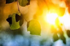 picture of photosynthesis  - Butterfly on transparent green leaves at sunset - JPG