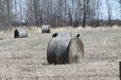 picture of hay bale  - Crows on top of round hay bales in a field - JPG