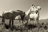 stock photo of herd horses  - Herd of horses - JPG