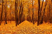 picture of orientation  - Autumn forest in deep autumn - JPG