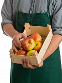 picture of farmworker  - Farmer with green apron and grey shirt holding crate with fresh harvested apples isolated on white background - JPG