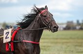 pic of horse-breeding  - Horse racing is a type of testing horses on playfulness  - JPG