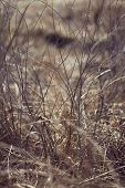 pic of dry grass  - Autumn dry grass - JPG