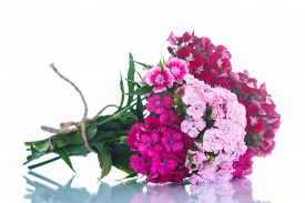 image of carnations  - bright bouquet of carnations on a white background - JPG