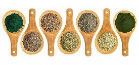 pic of irish moss  - seaweed and algae nutrition supplements  - JPG