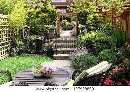 Small townhouse perennial summer garden
