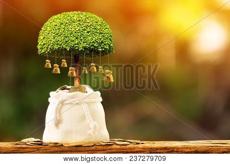 poster of Coin In The Money Bag And Growing To A Money Bag Of Tree With Savings Money Put On The Wood In The M