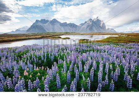 Beautiful view of perfect lupine