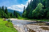 Mountain River Among The Forest In Summer. Rocky Shore And Grassy Banks. Low Water Capacity. Green A poster