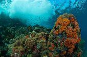 foto of raja  - Waves crashing on a seamount with a general reef scene Raja Ampat Indonesia - JPG