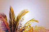 Coco Palm Tree Vintage Toned Photo. Tropical Vacation Destination Place. Exotic Island Holiday. Trop poster