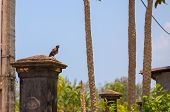 Small Tropical Bird On Stone Column In Green Park. Birdwatching Photo. Tropical Bird With Brown Feat poster
