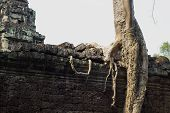 Ancient Ruins Of Preah Khan Temple With Stone Carving, Siem Reap, Cambodia. Old Tree With Aerial Roo poster