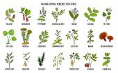 Best Medicinal Herbs For Chronic Fatigue. Hand Drawn Vector Set Of Medicinal Plants poster