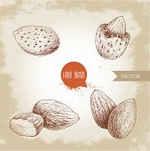 Hand Drawn Sketch Style Almond Set. Single, Group  Seeds And Almond In Nutshell. Organic Food Vector poster