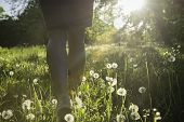Walk In The Park. Girl Walking In The Park Field In Sunset. Bright Dandelions In The Park Afternoon  poster