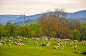 Scenic Spring Rural Landscape With Mountains And Traditional Maramures Neo-gothic Church On Backgrou poster