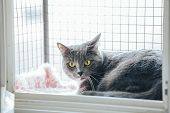 Safety Window Gray Cat. A Special Enclosure For Cat Safety Is Installed On The Window poster
