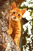 Red Kitten In Early Autumn On Big Tree Bark. Close Up Cute Kitten Climbing On Tree In September On C poster